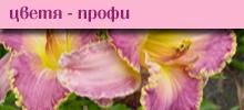 Цветя профи