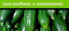 Краставици  и корнишони