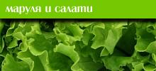 Маруля и салати