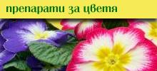 Препарати за цветя
