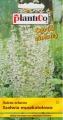 Салвия скларея - Salvia sclarea - 0.5 г
