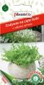 Ендивия къдрава - Cichorium endivia - 0.5 г