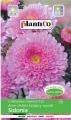 Астри тип СИДОНИЯ розови - Callistephus chinensis - 1 г