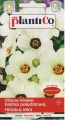 Хибискус летен - Hibiscus  trionum - 1 г