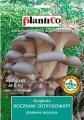 Кладница - Pleurotus ostreatus - 15 пина