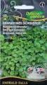 Дихондра пълзящя Емералд - Dichondra argentea - 6 сем
