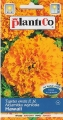 Тагетес висок оранжев - Tagetes erecta fl.pl.-1 гр