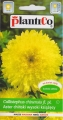Астри Принсес жълти - Callistephus chinensis - 1 г