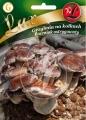 Гъба ШИЙТАКЕ -Lentinula edodes - 20 пина