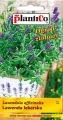 Лавандула - Lavandula officinalis  - 0.2 гр