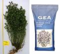 Люцерна Джеа / Gea - Medicago sativa - 1 кг