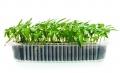 Тавичка за отглеждане на микро растения - бр